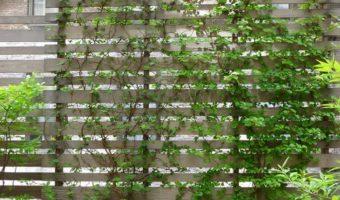 4 ý tưởng cho vườn trên sân thượng nhất định phải thử