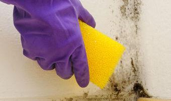 """Các công thức """"lau sạch"""" nấm mốc khỏi tường nhà"""