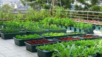 Nếu bạn muốn có một vườn cây trên sân thượng, hãy xem bài viết này
