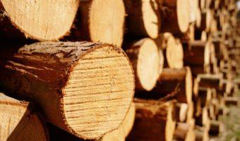 Cách phân biệt nội thất gỗ sồi và gỗ tần bì