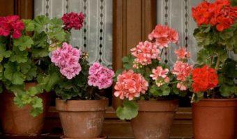 10 loại cây cảnh tuyệt diệu giúp không khí trong phòng thêm trong lành