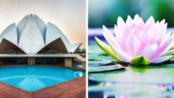 19 kiến trúc tuyệt đẹp được lấy cảm hứng từ thiên nhiên
