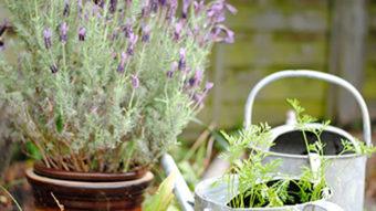 7 loại cây cảnh đặt trong nhà giúp tăng cường sức khoẻ