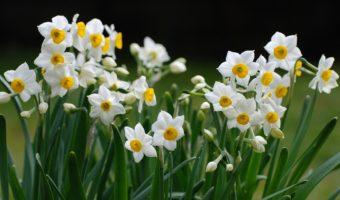 Ý nghĩa phong thuỷ của từng loại hoa