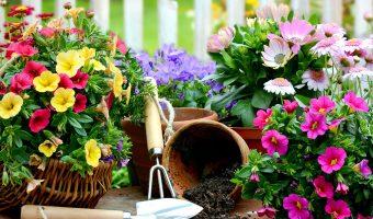 9 bước đơn giản để trồng cây ở ban công chung cư