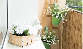 Hoa ban công đẹp với sắc trắng tinh khôi, dịu dàng