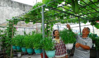 Một số kinh nghiệm trồng rau ban công chung cư