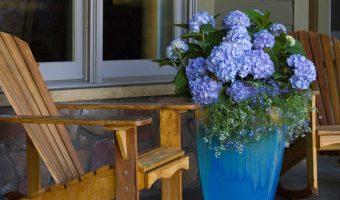 Những loài hoa trồng ở ban công cho mùa đông thêm rực rỡ