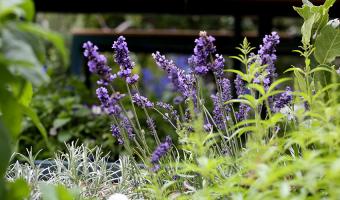 Trang trí ban công đẹp như cổ tích với sắc hoa màu tím