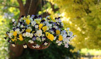 Hoa treo ban công mang lại một vẻ đẹp đầy quyến rũ