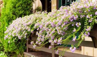 Trồng hoa ban công chung cư và một số điểm cần lưu ý
