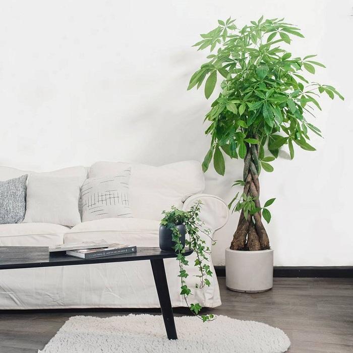 Những nguyên tắc cần biết khi trang trí phòng khách nhà ống-4